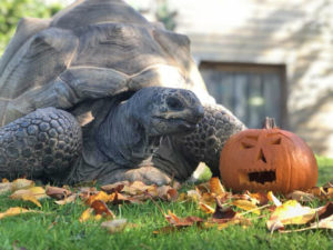 colchester zoo halloween